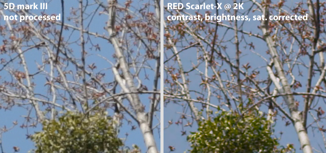 5D3 vs Scarlet1 Image Detail: 5D mark III matches RED Scarlet X @ 2K