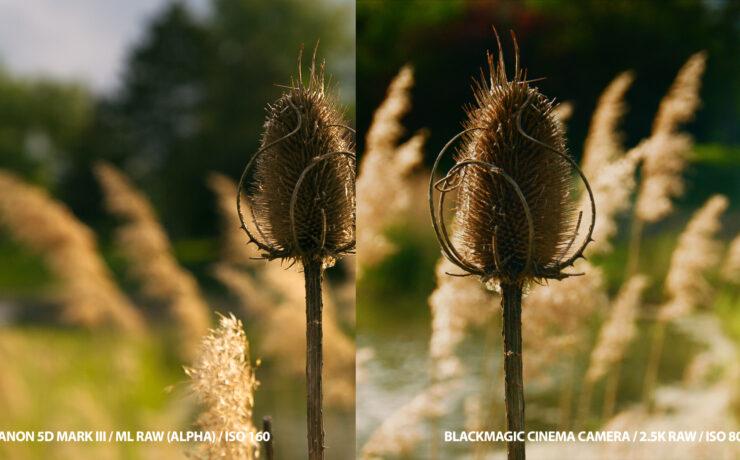 Canon 5D mark III RAW vs. Blackmagic Cinema Camera RAW