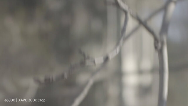 a real loss of definition and smoothness in the bokeh