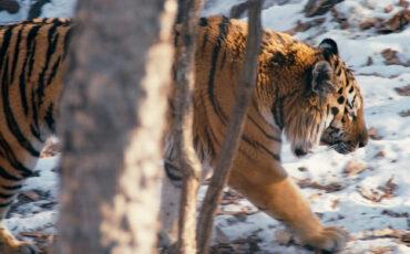 """SUNDANCE 2019: Spotlight DP Matt Porwoll - """"Tigerland"""""""