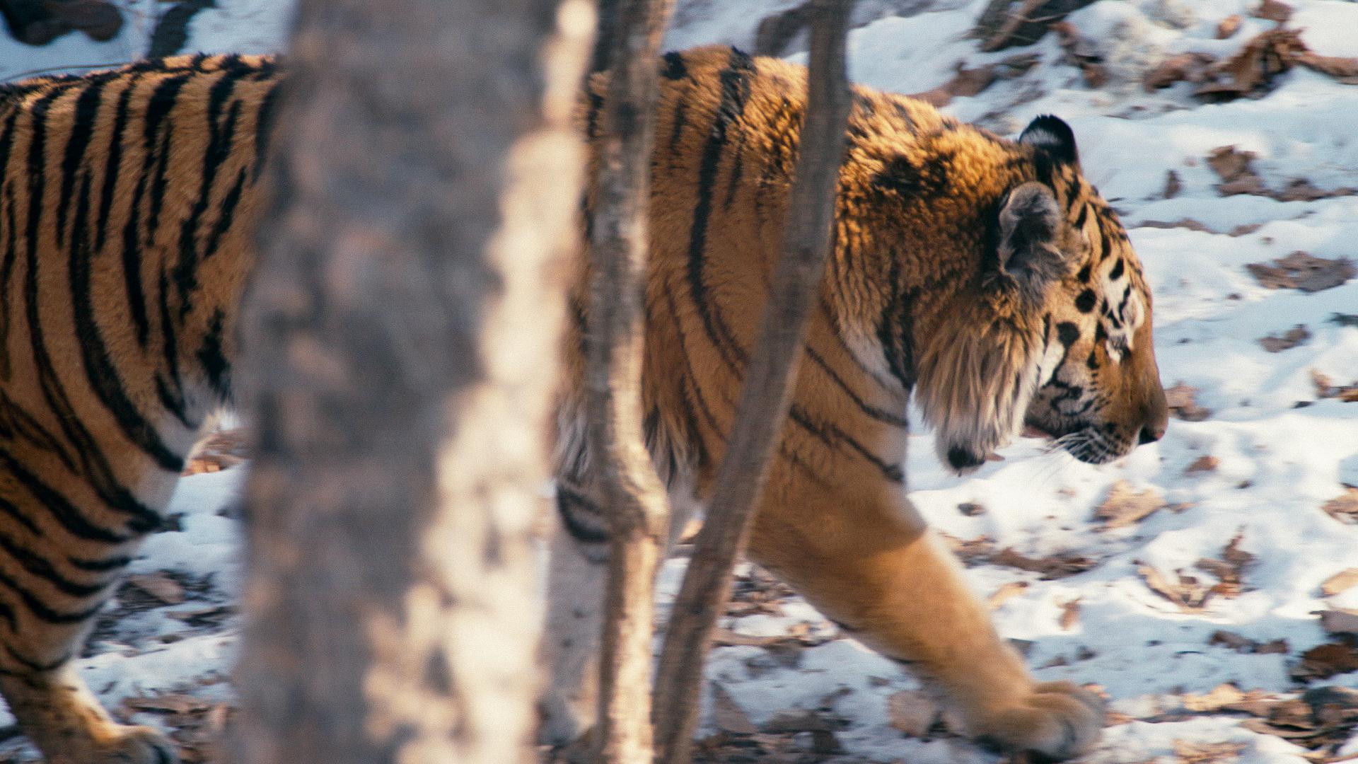 """SUNDANCE 2019: Con el foco puesto en el director de fotografía Matt Porwoll - """"Tigerland"""""""