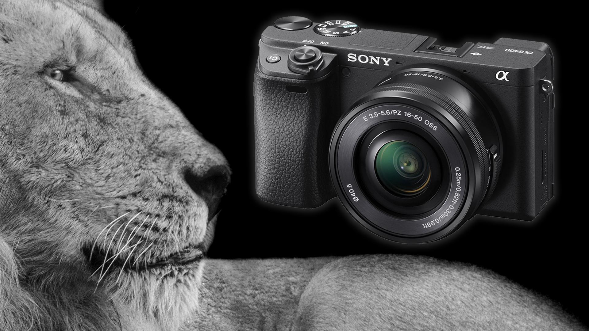 Firmware 2.0 para Sony a6400 permite enfoque automático en ojos de animales en tiempo real