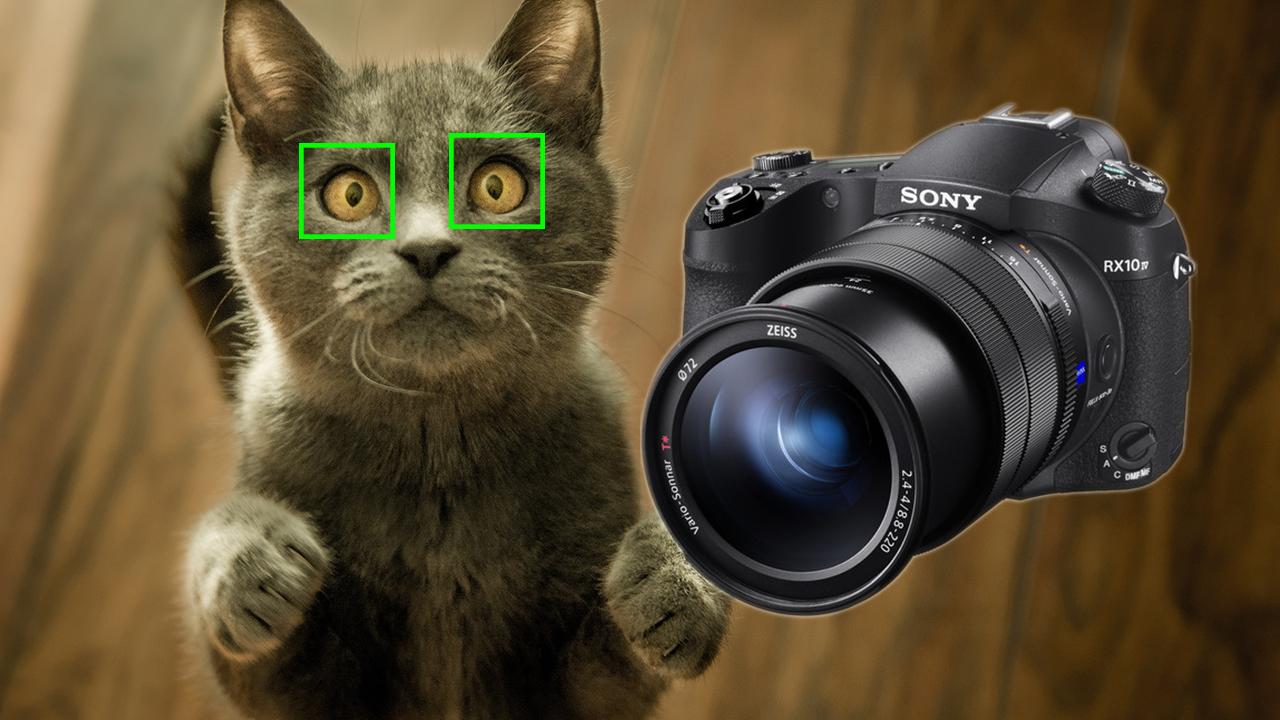 ソニーがRX10 IVのファームウエアアップデートをリリース - 動物用リアルタイム瞳AFを追加