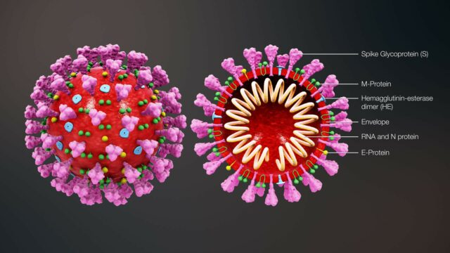 Coronavirus Graphics (Taken from: TDM Audio Pro Presentation, 2020)