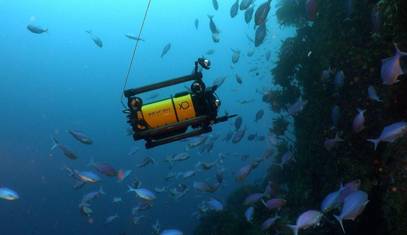 Boxfish Luna - 8K Underwater Drone with Sony Alpha Camera Inside