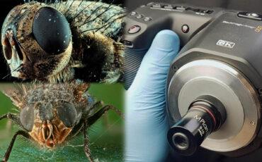 Cómo adaptar los lentes de microscopio a la BMPCC 6K para obtener increíbles fotografías macro