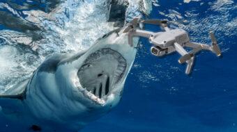 ドローンがサメに襲われた漁師の救出に貢献